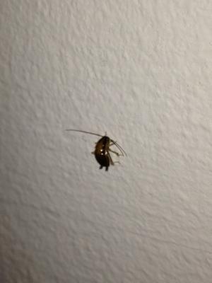 Jenny Eriksson har hittat många kackerlackor i sin lägenhet och vill inte bo kvar.