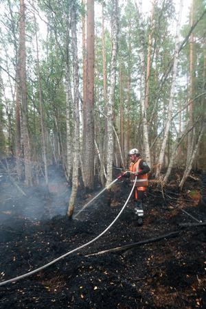 Henrik Simssons företag Jämtservice Skog & Fjäll har även tidigare åtagit sig eftersläckningsarbete i skog – här är Henrik i Fågelsjö.