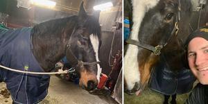 I väntan på att ägaren hämtade hem sin häst stod hästen i Rickard Åséns stall.