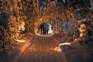 Längs promenadvägen lyste månen upp bland de snötyngda träden.