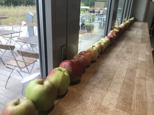 Äpplen på rad. Naturens hus har haft äpplen som tema hela veckan i restaurangen.