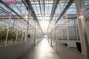 Är stora växthus ett framtidsscenario? Foto: Magnus Hjalmarson Neideman / SvD / TT /