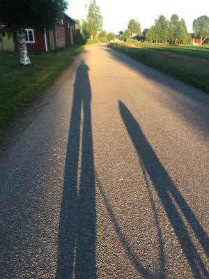 Nattpromenad med hund. Foto: Göran Greider
