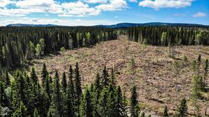 Hygget i Offerdal, en avverkning där mer än 30 hektar skulle ha ingått i ett naturreservat.