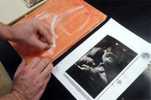 Här växer bilden av gorillan från i händerna på Bror Högbom. På bottenfärgen fäster han bilden i gråskala, som ger djup och volym, först med kol och krita, sedan med olja. Om man målar i förg läggs de på sist.