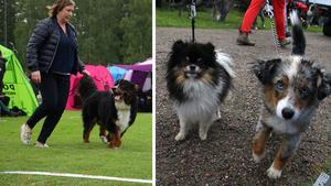 Till hundutställningen är alla välkomna. Både stora som små.