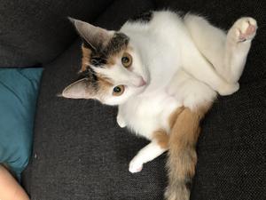 49) Kerstin e katten med stort 'ego'. Hon hoppar alltid upp i soffan på kvällarna med resten av familjen för att kolla in serier. Foto: Madeleine Larsson