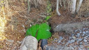 Bäcken i Gullänget hade färgats grön