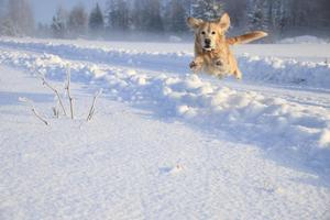 Januari. När hunden hoppade runt i snön i Morgongåva kunde inte husse hålla sig från att ta en bild.  Foto: Mats Köbin