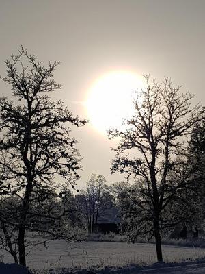 Bilden är tagen i närheten av Hjälmare Kanal utanför Arboga. Det var dimma i luften och –12 grader. Foto: Anna-Lena Persson.