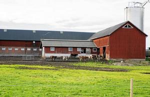 Säby gård, länets största ekologiskt drivna mjölkgård, i Ytterjärna.