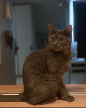 505) Hej här är min katt Siri tack & hej trevlig tjej Foto: Kristoffer hellberg505) Hej här är min katt Siri tack & hej trevlig tjej Foto: Kristoffer hellberg