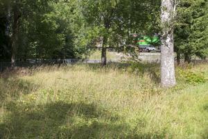 En stor del av skolgården är täckt av vildvuxet gräs.