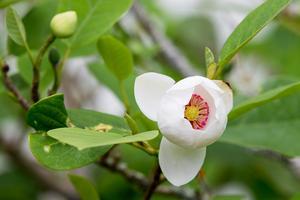 Så här års blommar det vackert i den engelska trädgården vid Boo slott.