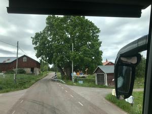 Den fridlysta linden i Orsa. Läsarbild: Maj Anita Persson.