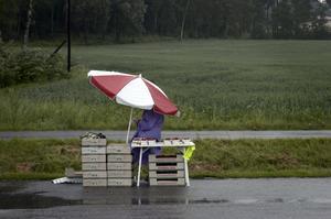Jordgubbsförsäljare här i regnet längs en landsväg. Skribenten saknar dock försäljarna på de svenska torgen och kritiserar torghandelskulturen i vårt land.