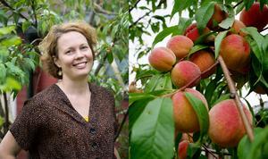 Emma Henning har fått skörda massor av persikor på sitt lilla träd i trädgården i Slätta i år. Foto: Anna Klint och Emma Henning