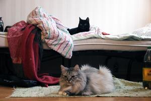 Katterna Hell Raise och Tigrun hämtades ut av brandmännen i somras när lägenheten brann.