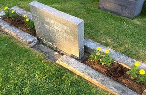 Maria Källström planterade pelargoner på sin farfars och farmors grav. Nu är bara hålen kvar och gula tagetes. Foto: Maria Källström