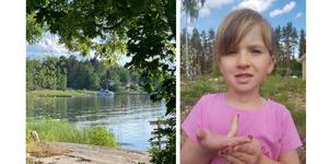 Till vänster blommar sommaren i Harka. Foto: Tommy Vingsblå. Till höger har Nora hittat en nyckelpiga. Foto: Alex Diaz Ahlberg