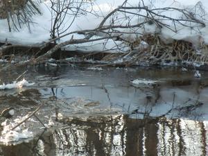 Den tuffa Strömstaren i det kalla vattnet, kan vara svår att upptäcka. (längst ner till vänster)
