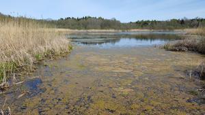Sjön Bollen. Foto: Lennart Mattsson