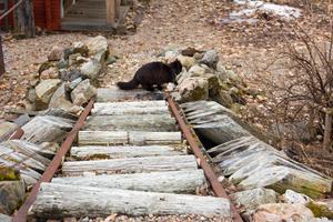 Gamla rälsbitar kantar trappen i trädgården. Om rälsen ursprungligen legat vid stationshuset är inte känt.