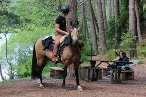 Opus är en lugn häst som är van att var hemifrån.