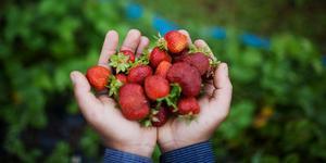 """""""Dalarna har tagit steg i rätt riktning, men det finns mycket mer att hämta i en snabbare ekologisk omställning"""" skriver  Jonas Carlberg, affärsområdeschef lantbruk på Krav."""