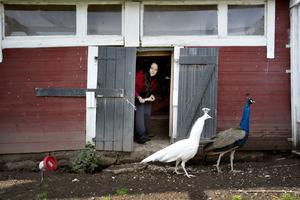 Jane Johnsson i Torsåker, Prästhyttan älskar djur.