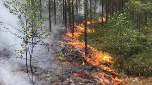 Skogsbränderna 2018. Foto: Roalnd Illvesand
