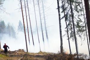 Skogsbränder sprider sig snabbt. En hjälparbetare skyndar sig att försöka få kontroll på situationen vid Kastaviken.