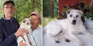 Hunden Hero blir 18 år på måndag, en ovanligt hög ålder enligt Svenska terrierklubben.