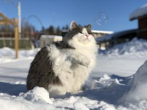 119) Boris leker med såpbubblor ute i snön! Foto: Lisa Åkerström