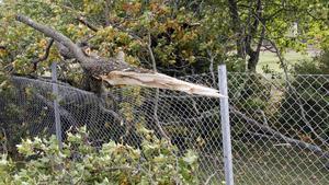 Trädet vid Dingtuna station knäcktes av stormen.