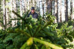 Angreppen av granbarkborre minskar i norra Hälsingland men ökar i södra Gästrikland konstaterar Nils Frank på Skogsstyrelsen.