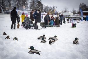Vinterparken lockade både folk och fjäderfä.
