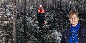 Lars Strandberg från Kårböle på ännu ett brandskadat skifte. Foto: Peter Hoelstad