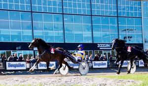 Jan-Olov Persson fick med tre hästar, bland annat Eld Rask. Bild: Mats Persson