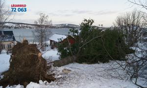 Stormen Dagmar drabbade oss hårt. Tre träd välte omkull under natten på vår gård! Tallen fick med sig roten och allt.Som tur var så klarade sig vårt hus med en hårsmån från den fallande björken, skriver Jennie Oscarsson.