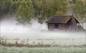 Vacker lada, tidig novembermorgon i Hå. Foto: Hasse Ångman