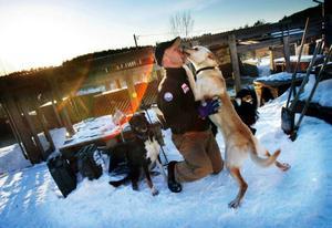 Claes Arvidsson har tio egna draghundar. Till Amundsen Race har han lånat ihop ytterligare två och kör med tolv hundar i sitt spann. Foto: Denny Calvo