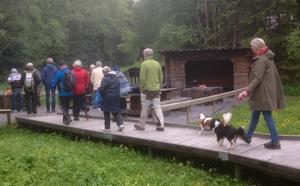 Hembygdsföreningen Gamla Lugnvik arrangerade en vandring till Tysjöarna. Foto: Eva-Britt Borg-Björnström