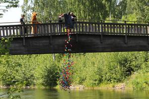 Prick kl 14.00 startade Bäverracet och de 700 numrerade bollarna släpptes ner i Iggesundsån.  Foto: Mattias Bodare