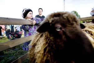 Sanna Löfstrand ville klappa fåren.