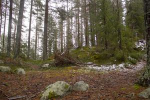 Så här ser det i dag ut på platsen där Vågbro fornborg en gång låg.