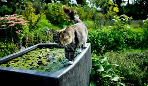 Vackra trädgårdar är en njutning för alla.