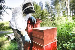 Hemma på gården har han bara tre bikupor att sköta om, mest för skojs skull.