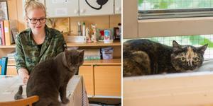 Emilia Hallberg är volontär och sommarjobbare på katthemmet.