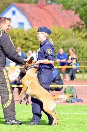 Lymla är en belgisk vallhund av rasen malinois. Elin Bålefalk köpte henne som valp för att tävla med privat. Foto: Niklas Johansson.